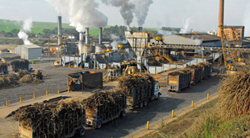 pulp & sugar processing industries